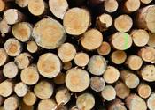 Main thumb timber