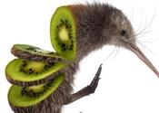 Main thumb kiwi zanni