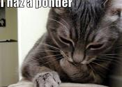 Main thumb funny pictures cat is pondering