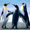 For post penguins